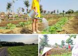 Đất sào nghỉ dưỡng 1000m2 huyện Đất Đỏ làm nhà vườn, giá 1,1 triệu/m2. LH 0329970171